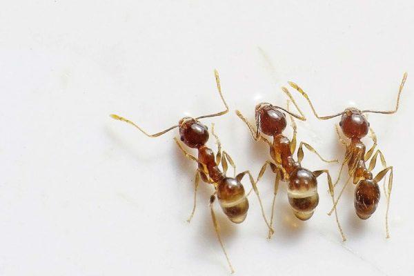 Eat Ants in Cambodia