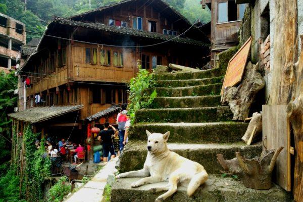 Pingan Village Dog