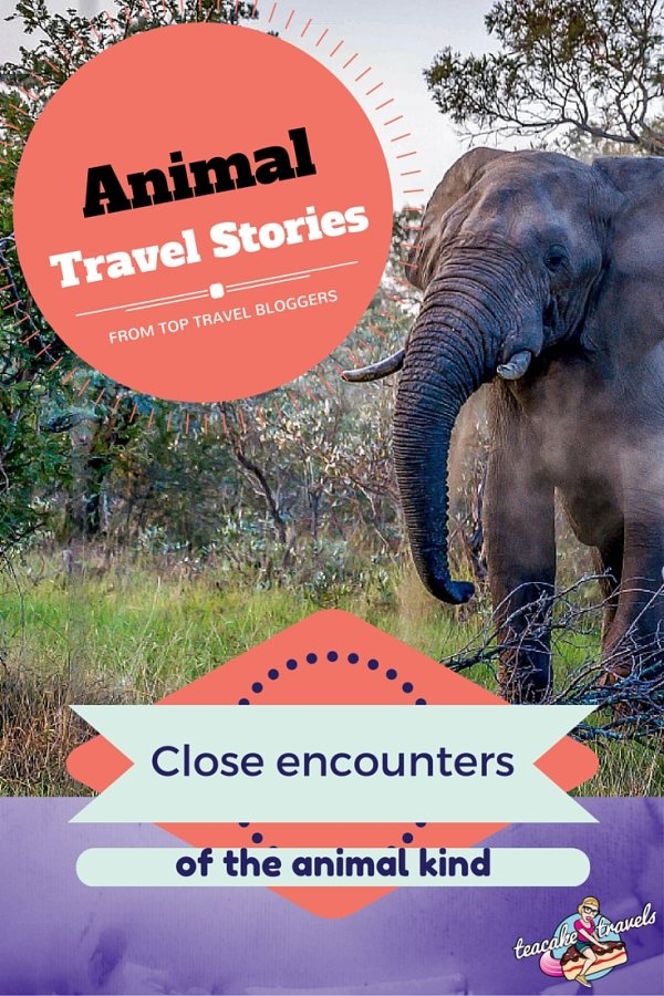 Close Encounters of The Animal Kind Stories of Animals Whilst Travelling