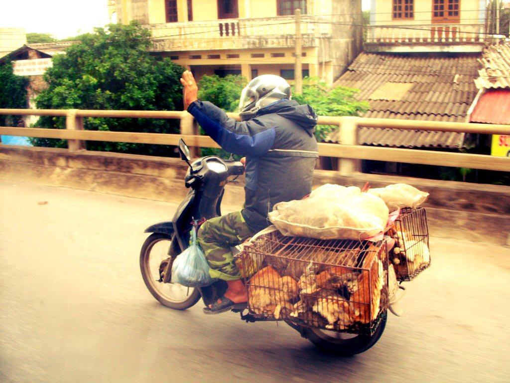 Cat Meat in Vietnam