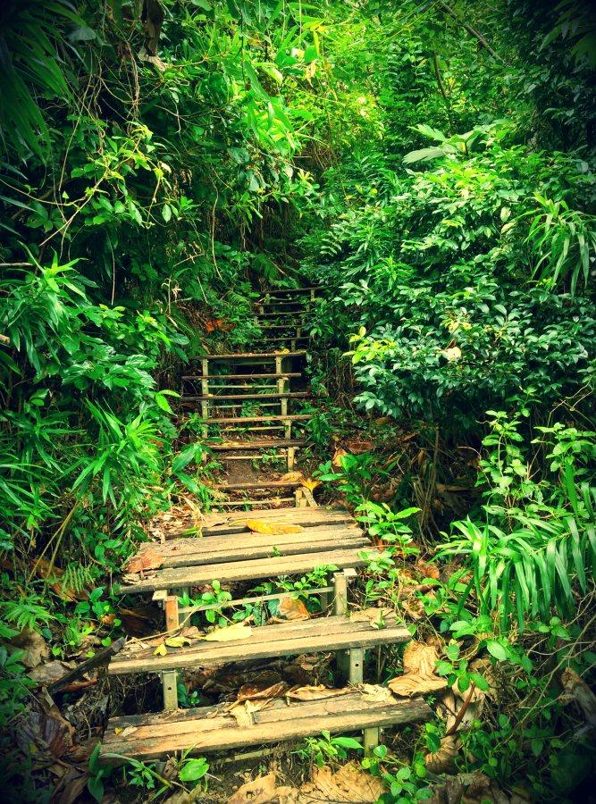 Lanyu Island Jungle Hiking