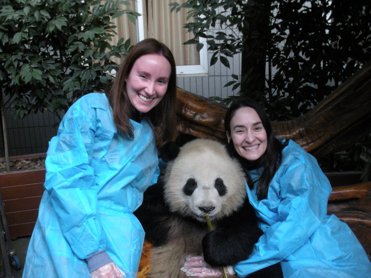 Hugging a Panda in China