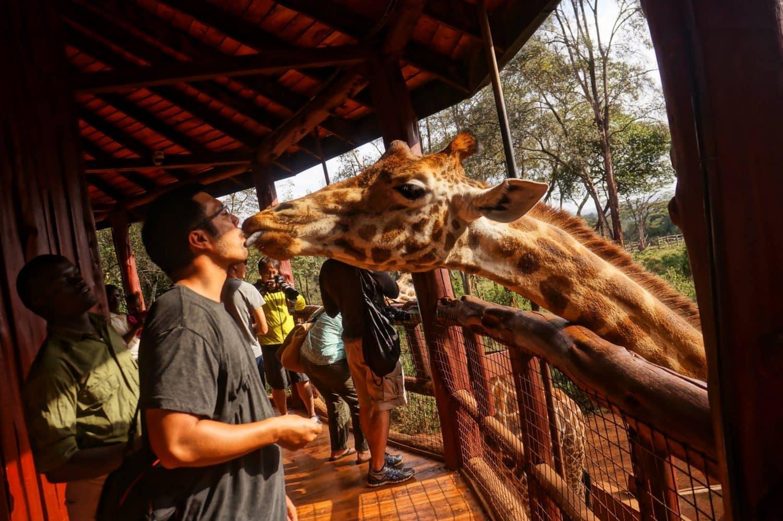 Giraffe Center Nairobi Kenya