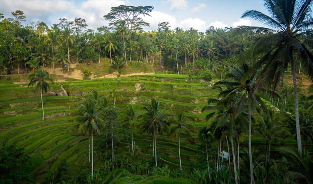 Bali Guide