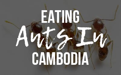 Eating Ants in Cambodia
