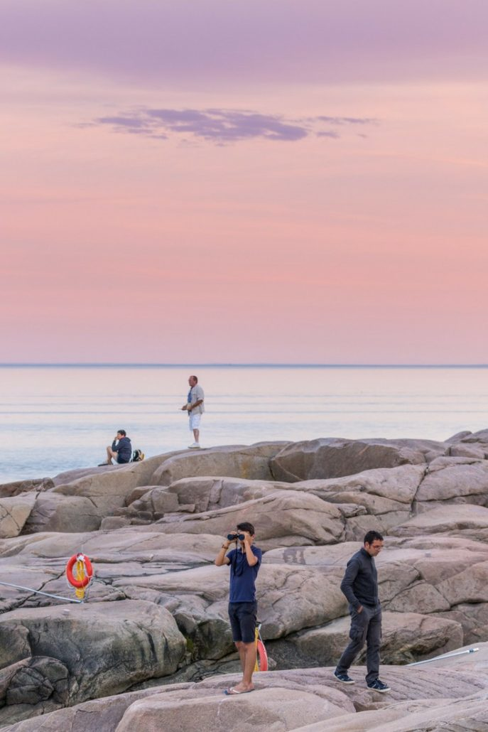 Whale Watching Tadoussac Pinterest (1)