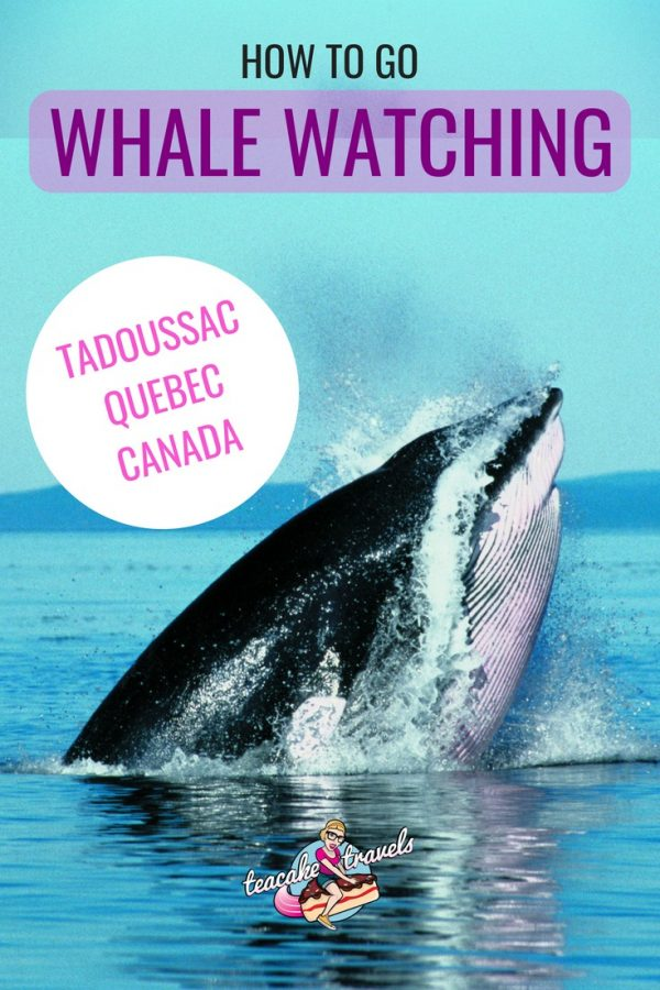 Whale Watching Tadoussac
