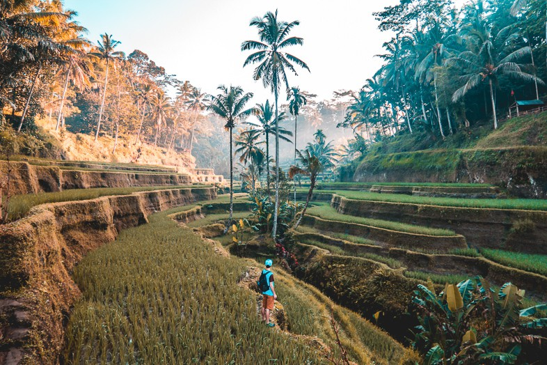 Solo traveler walking through fields in Bali as one of their reasons to travel