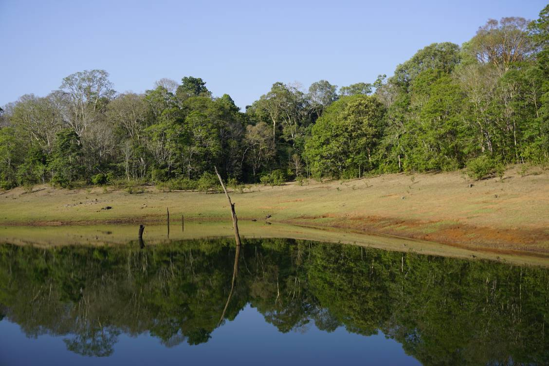 A lake and green trees in Periyar National Park