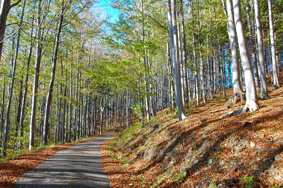 Photo of a path curving off around a hill and lined with trees on Ondrejnik mountain