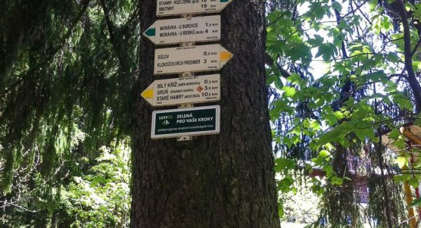 Photo of a tree with a bunch of signs pointing to different hiking trails in every direction