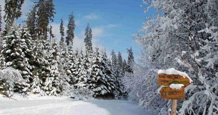 Photo of trees in Beskydy all covered in a thick blanket of white snow