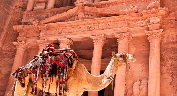 Photo of camel in the Petra, Jordan