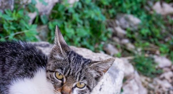 Photo of a kitten found at the second cafe on the Ladder of Kotor