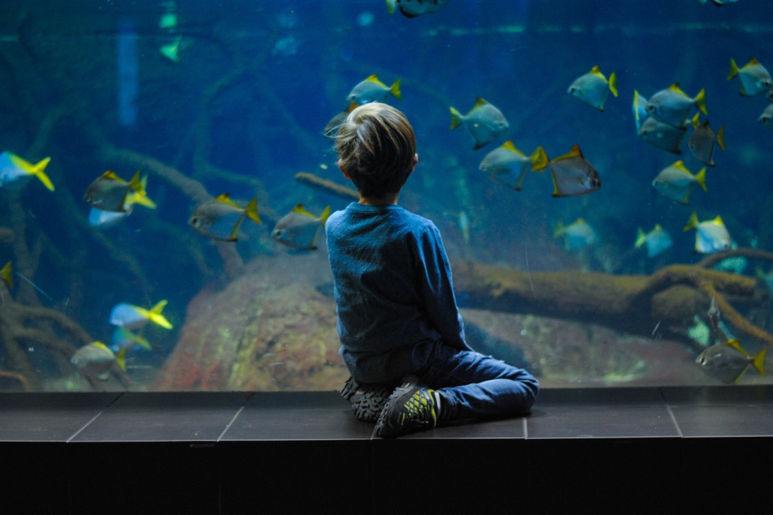 Little boy looking through the glass of the Sealife London Aquarium during a day out in London