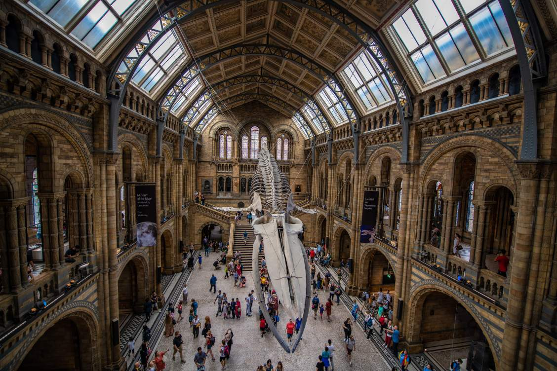 Inside of the Natural History Museum in London with the skeletons of mammals hanging from the ceiling