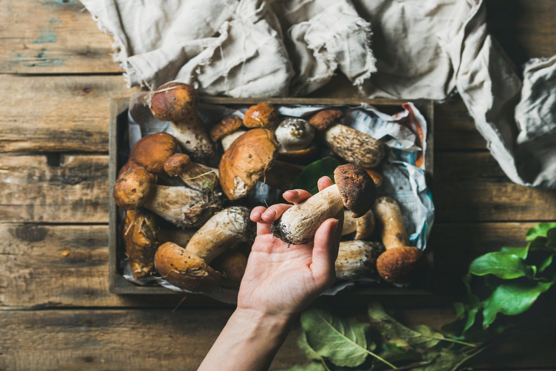 Birds eye view of woman holding mushrooms in her hand that she has foraged